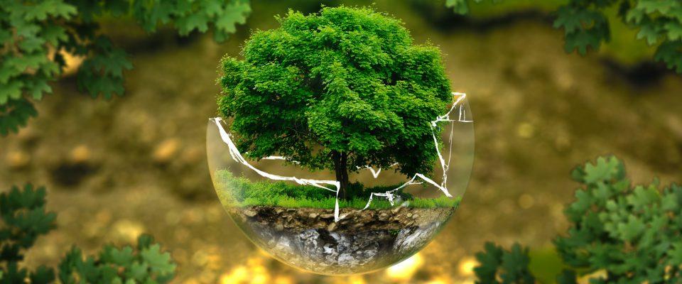COP 24 e a vontade de mudar